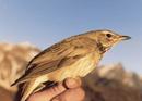 Nepal's Bird Man: Hari Sharan Nepali