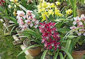 The Fascinating World of Orchids