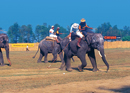Jumbos and  Polo Players: 24th World Elephant Polo Championship