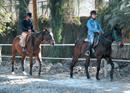 Easy Rider At Chandra Horse Riding Centre