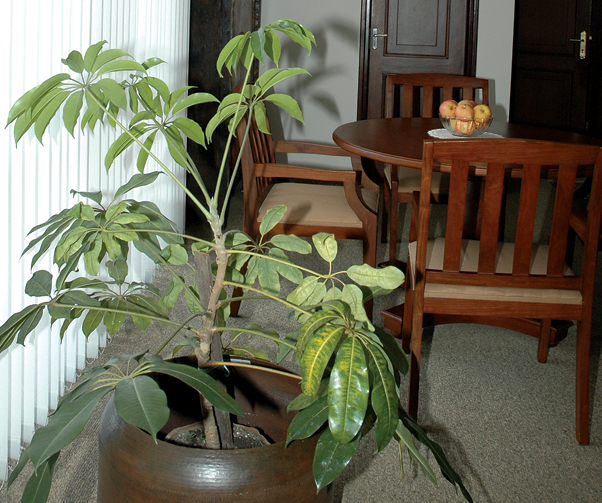 Indoor Plants: The Greener Side Of Your Personality
