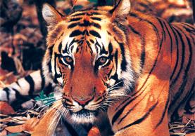 Nepal's Wildlife