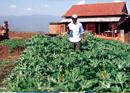 The Organic Village: Going Organic