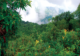 Hariyo Ban Nepal ko Dhan: Nepal's Forest Wealth