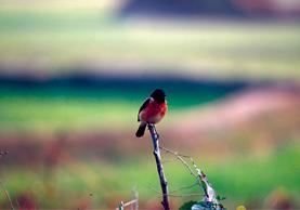 Bird Watching In Nepal