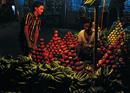The Wonders of Fruit