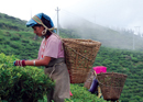 Mountain stories from Illam of Herbs and The Mountain Institute