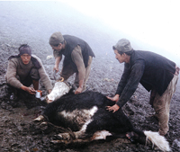 A Yak Herder's Breakfast at 14,000 ft.