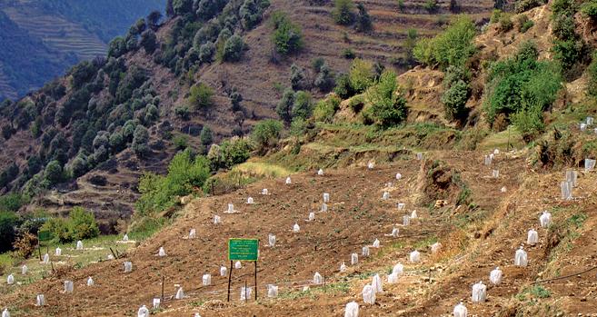 Himalayan Truffles
