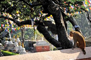 The Gangs of Swayambhu