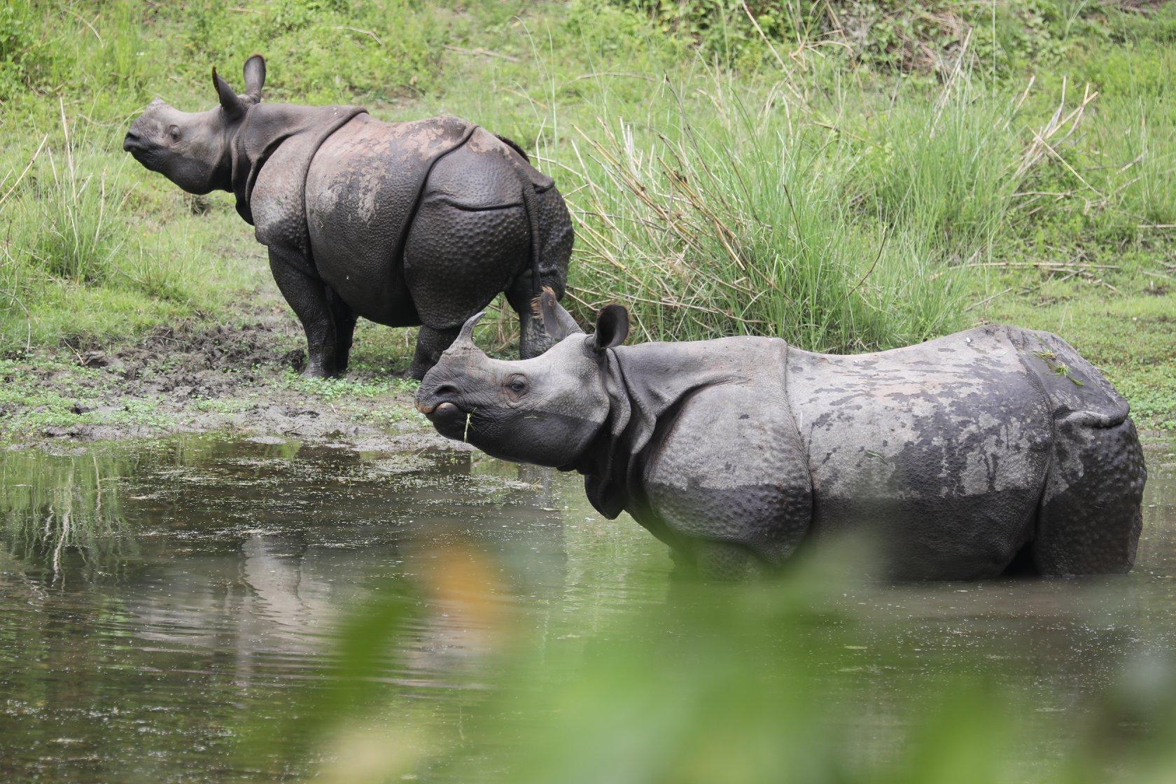 A Visit to Sarang Wildlife Sanctuary
