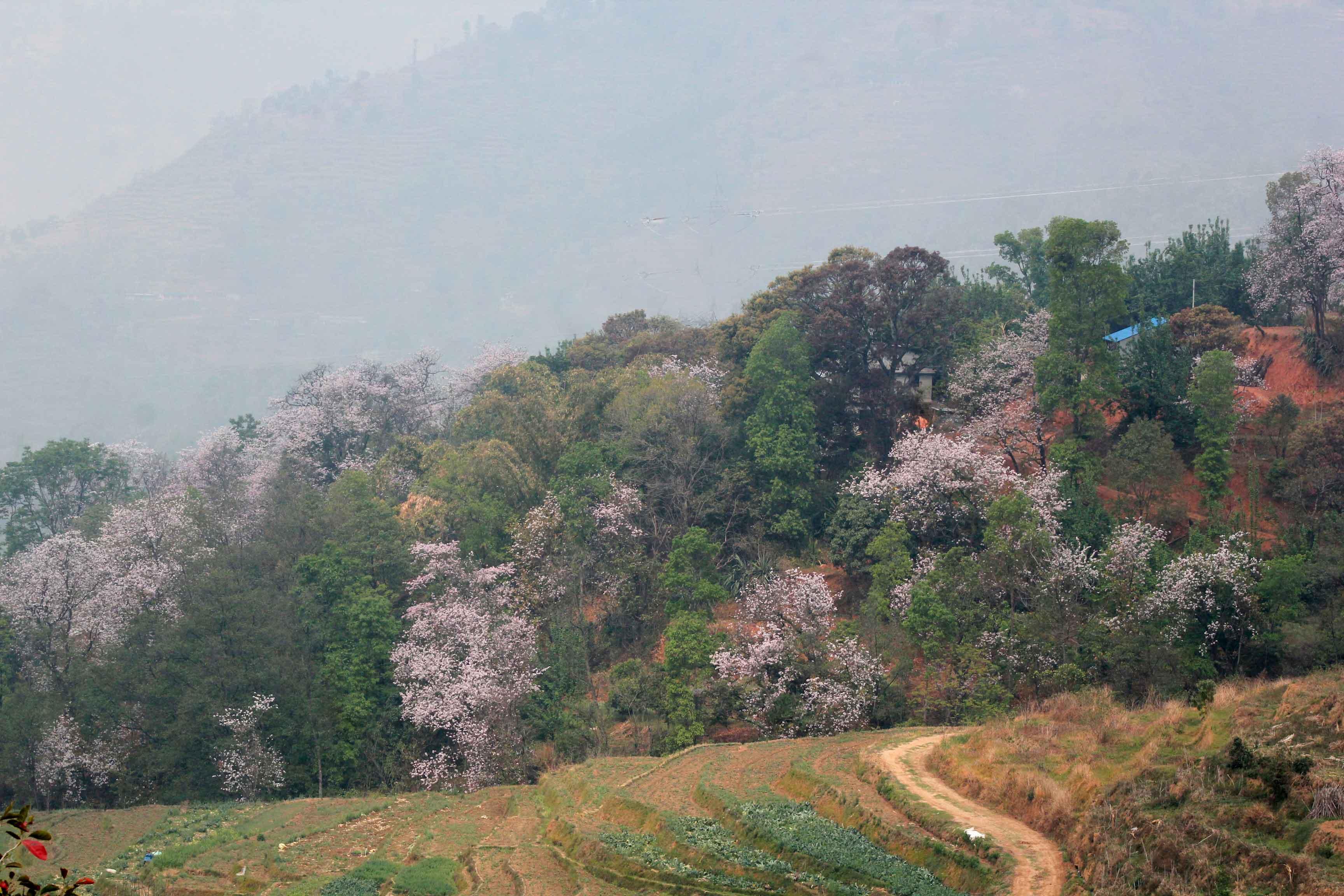 Bhimdhunga to Naubise in the Spring