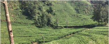 Tea Gardens and Rainbow Trout | Experience | ECSNEPAL - The Nepali Way