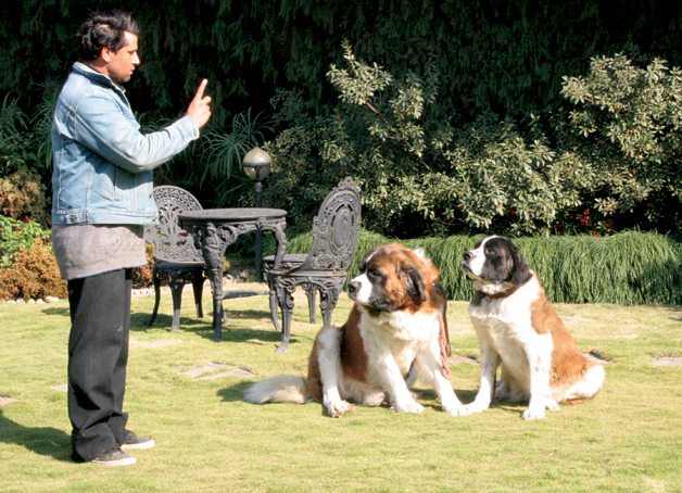 How To Teach Your Dog To Behave